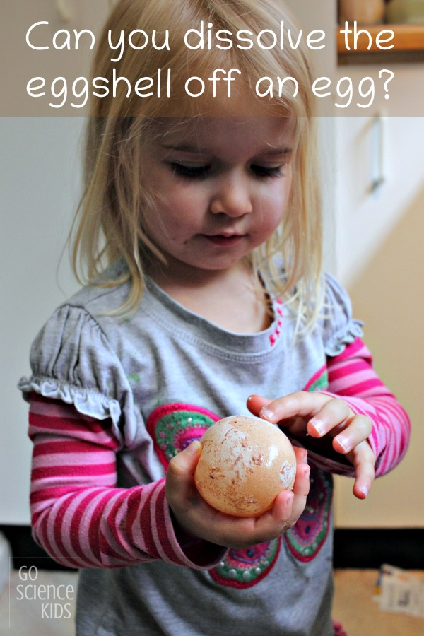 Can you dissolve the eggshell off an egg? Fun kitchen science activity for kids