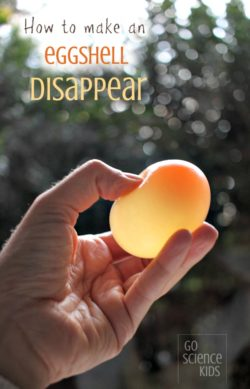 How to make an eggshell disappear - fun kitchen science activity for kids