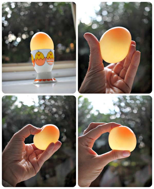 Rubbery, translucent, 'naked' eggs