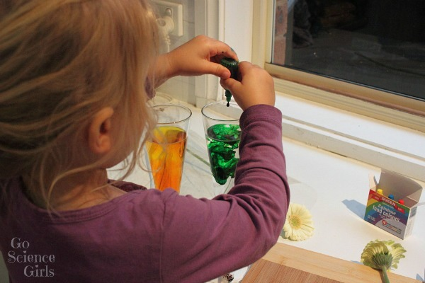 Adding food colouring to make dyed flowers