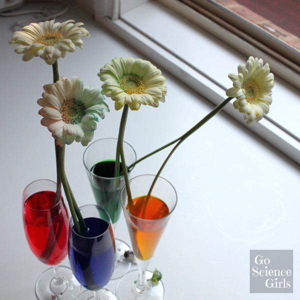 Bicolour flowers science experiment for kids