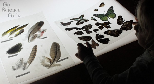 Butterfly wings and feathers on the light table