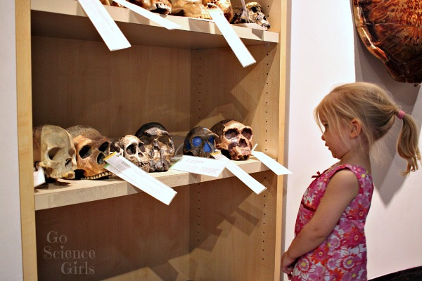 Learning about anatomy and anthropology at the Australian museum
