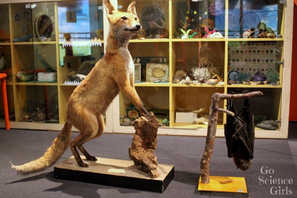 Taxidermied dingo and fruit bat