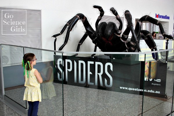 Spiders at Questacon
