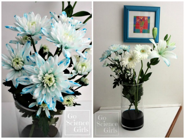 Adding blue colour to white flowers