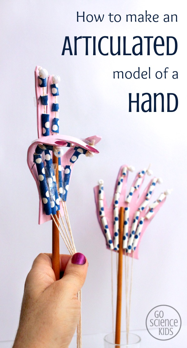 How to make an articulated model of a hand by Go Science Kids