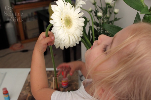 Pause and smell the gerberas