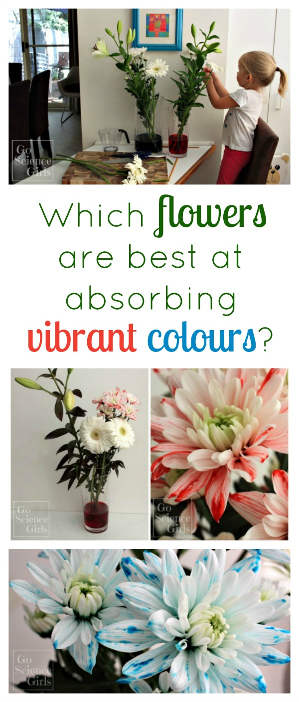 Which flowers are best at absorbing vibrant colours? Classic colour changing flower science experiment for spring