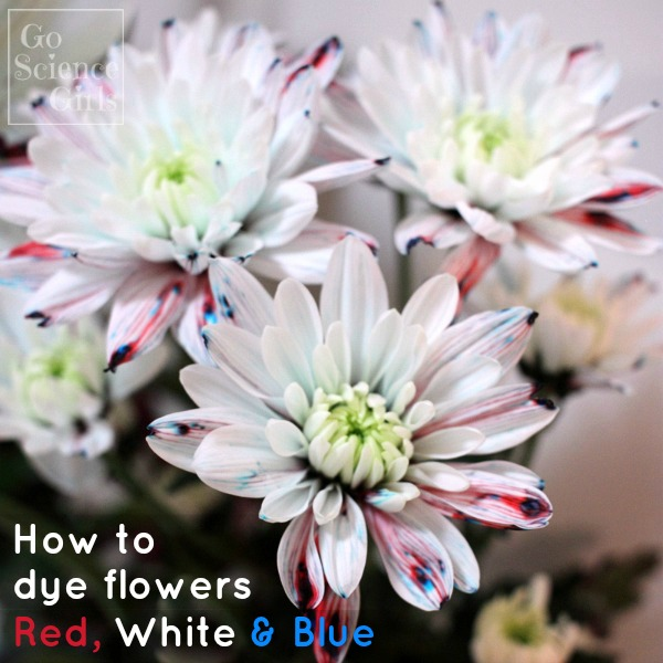 how to dye flowers red white blue