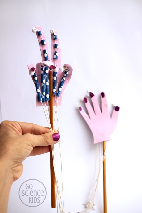 how to make a model articulated hand - fun biology science for kids