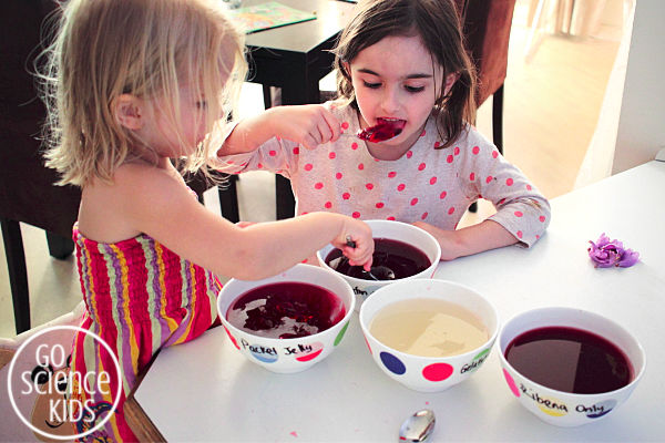 Tasting jelly and gelatin mixtures