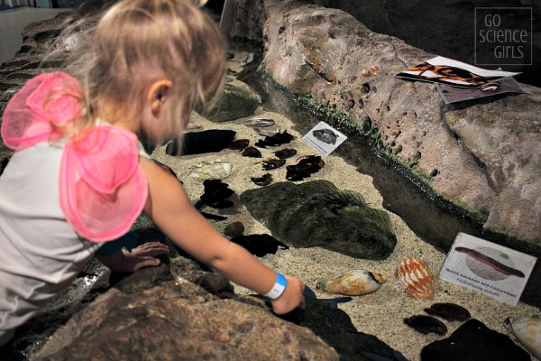 Exploring the hands-on rockpools