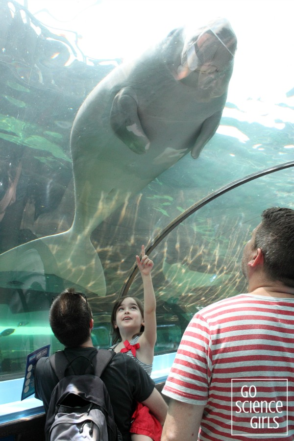 Seeing a dugong at Sydney Aquarium
