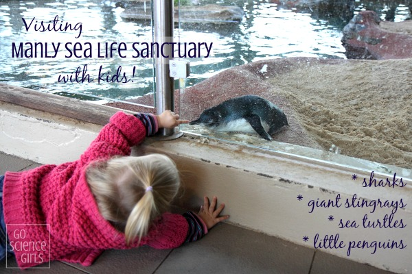 Visiting Manly Sea Life Sanctuary with Kids