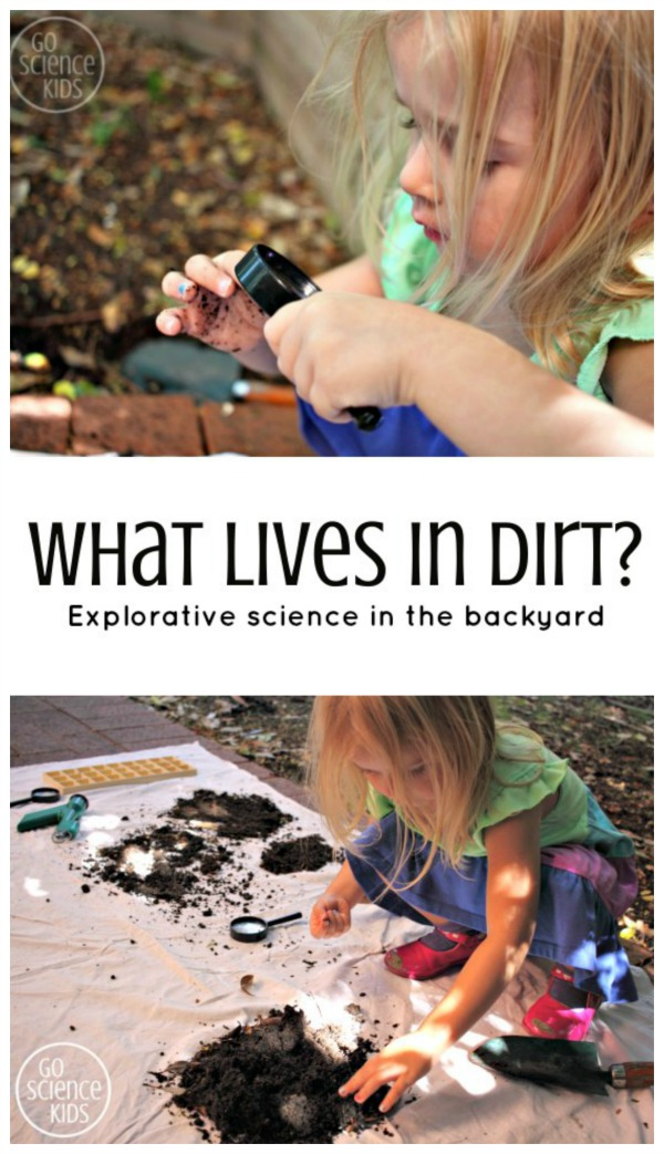 What lives in dirt - explorative backyard science experiment for preschoolers