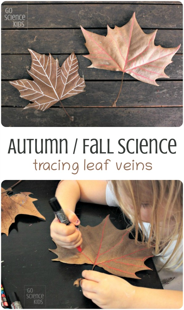 Autumn and Fall science - tracing leaf veins - nature science for preschoolers