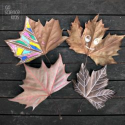 Decorating fall leaves and learning about leaf biology