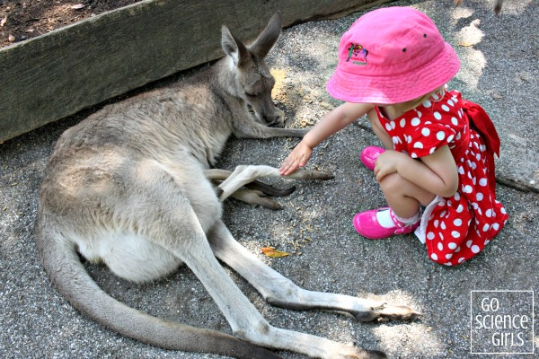 Patting the leg of a joey sticking out of it's mother's pouch