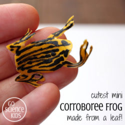 Cutest mini corroboree frog made from a leaf! Fun (and educational) nature craft idea for kids, to get them interested in the environment, biology and science