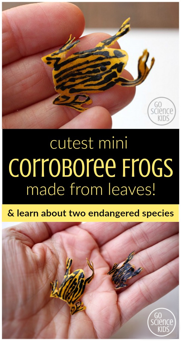 Cutest mini corroboree frogs, made from leaves! Great way to learn about two endangered species. ~ Go Science Kids