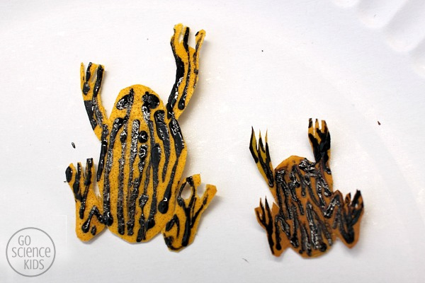 Adding stripes to the northern corroboree frog leaf