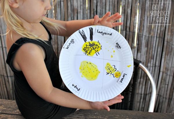 Paperplate lifecycle of the fungus-eating ladybird (ladybug)- fun nature study activity for preschoolers and up!