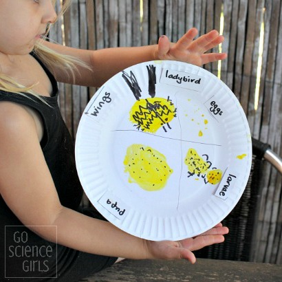 Paperplate lifecycle of the fungus-eating ladybird (ladybug)- fun nature study activity for kids