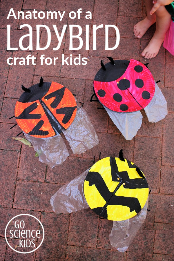 Anatomy of a ladybird craft, with elytra and wings