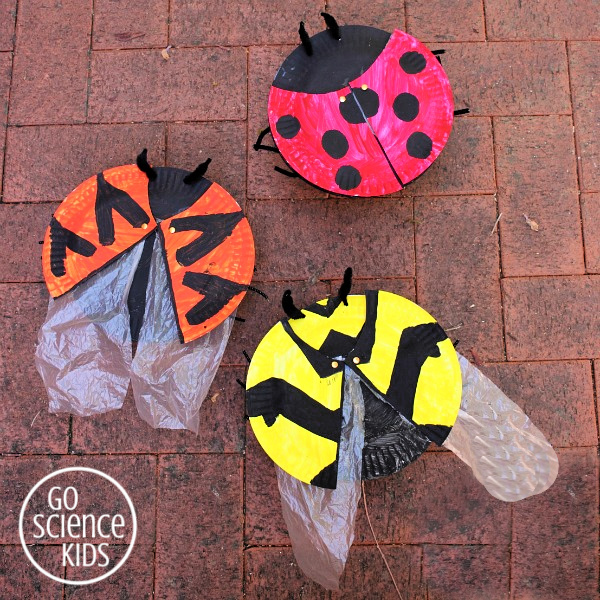 How to make a ladybird (ladybug) craft with hidden wings! And learn about three different ladybird species. Fun biology entomology nature scien