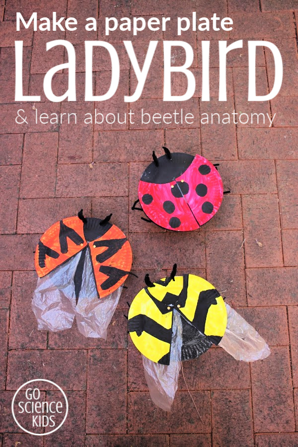 Make a paper plate ladybird and learn about beetle anatomy