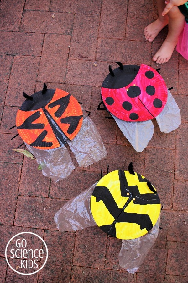 Paper plate ladybird (ladybug) craft, with wings! And learn about three different species of ladybird.
