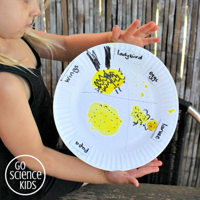 Paperplate lifecycle of the fungus-eating ladybird (ladybug)- fun nature study activity