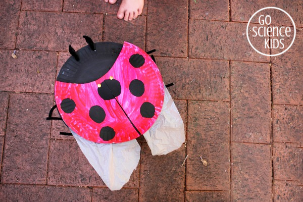 Seven-spot ladybird craft for kids, with hidden wings!