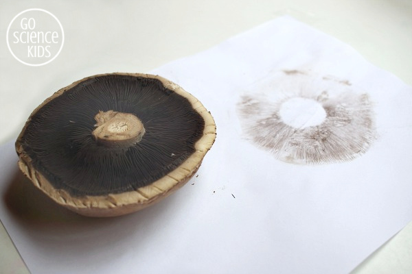 Making field mushroom spore prints