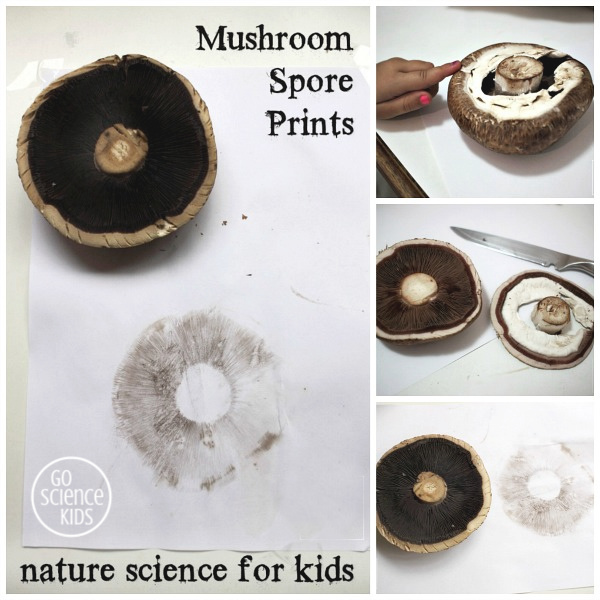 Nature science - make a mushroom spore print