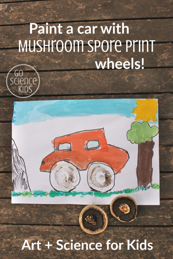 Paint a car with mushroom spore print wheels - art + science for kids