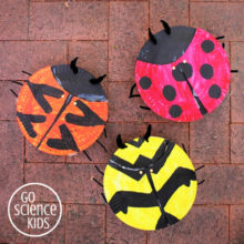 Paper plate ladybird (or ladybug) craft, including three different ladybird species. Fun nature science activity for kids