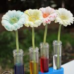Colour changing flowers - fun science experiment for kids